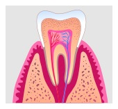 Root Canal Treatment South Weymouth